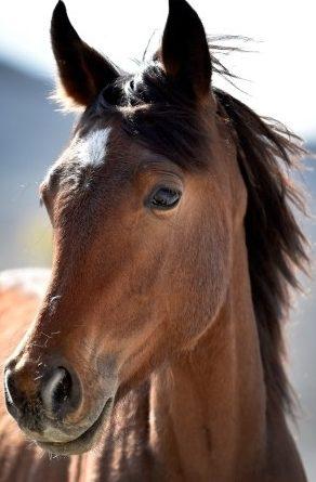 UPDATE ON BLM WILD HORSEROUNDUP