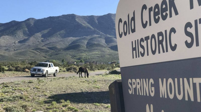 THE WILD MUSTANGS OF COLD CREEK:REVISITED