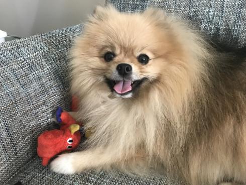 fur baby-Scribbles-internet famous-doggie-vashti quiroz vega-author-springtime-national puppy day-Vashti Q